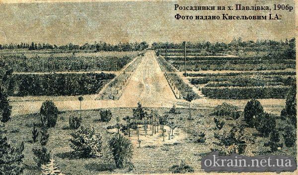 Розсадники на х. Павлівка, 1906р.