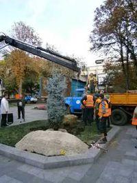В сквере «Октябрьском» в Кременчуге высадили две новые голубые ели.