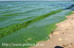 В Кременчугском водохранилище упал уровень кислорода