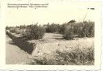 Массовые захоронение. Кременчуг 1942 год - фото 852