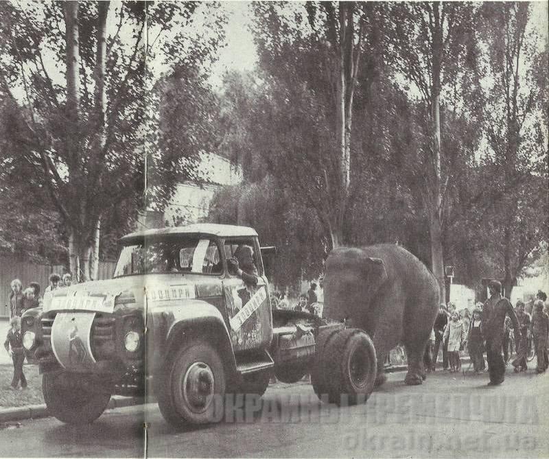 По улицам слона водили... В Кременчуг приехал цирк - фото №1722