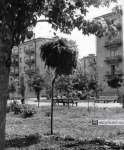 Бульвар Пушкина в Кременчуге - фото 767