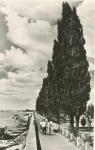 Набережная в Кременчуге. 1958 год - фото 450
