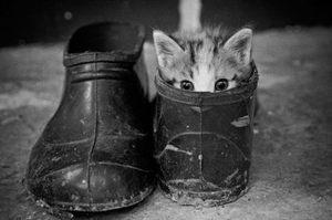 Регистрация домашних животных в Украине за 180 грн
