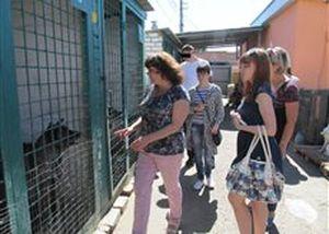 Підоблікові відвідали притулок для собак