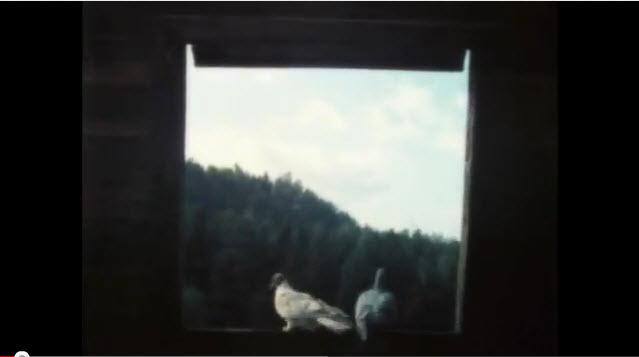 Изюмовские голуби - Кременчуг (история) - видео 973