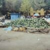 Sale of watermelons Kremenchuk photo number 2287